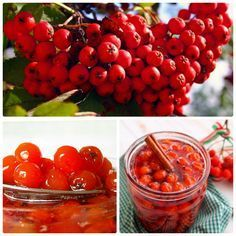 Вкуснейшее варенье из красной рябины, несколько простых рецептов: http://zagotovochkj.ru/varene-iz-krasnoj-ryabiny-na-zimu-3-prostyx-recepta.html