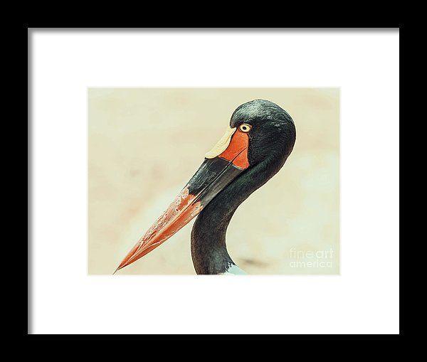 Saddlebill Stork Bird Portrait Framed Print