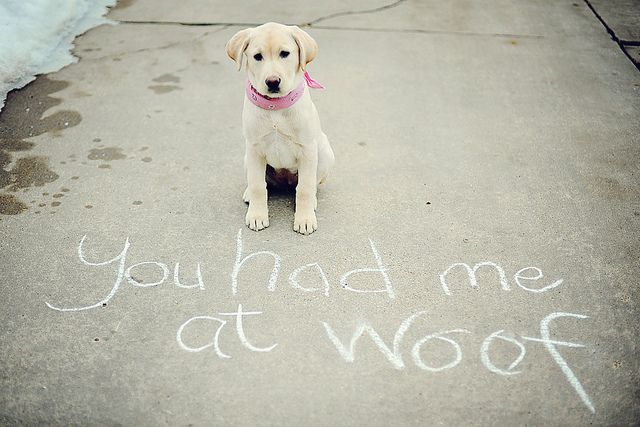"""Labrador #puppy in front of chalk graffiti reading """"you had me at woof"""" :-) #dogs"""