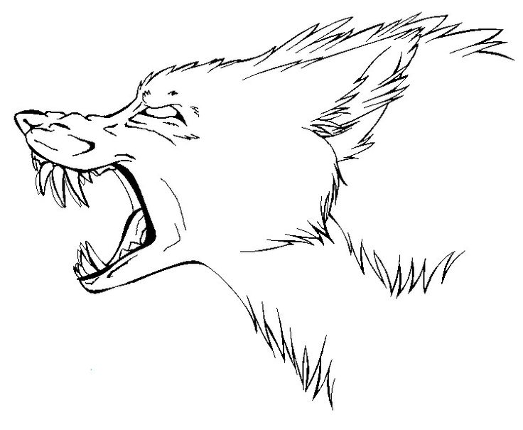 Wolf snarling side view drawing - photo#5