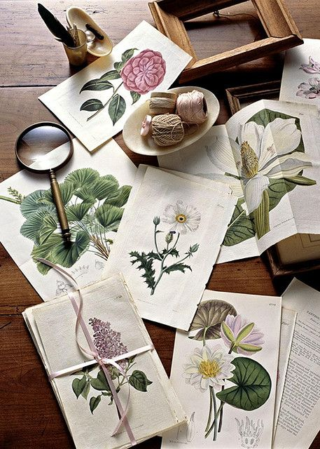 hand coloured botanical prints via Country Home.