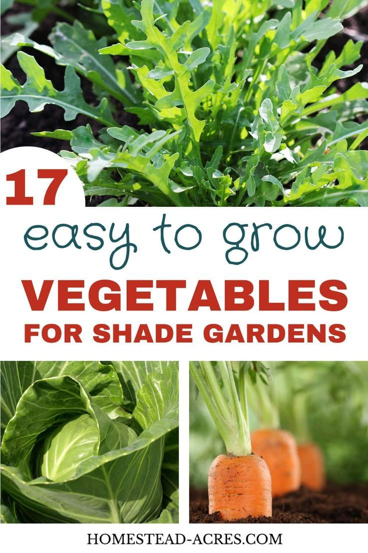 17 Easy Vegetables That Grow In Shade With Images Food Garden