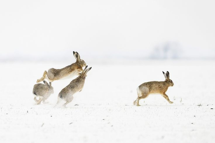 Battle Photograph by Kristóf Diós -- National Geographic Your Shot