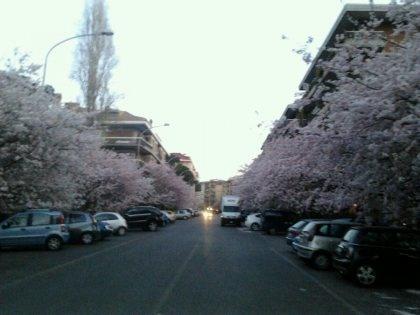 Una strada rosa. In vista tante femminuccie da queste parti... auguri