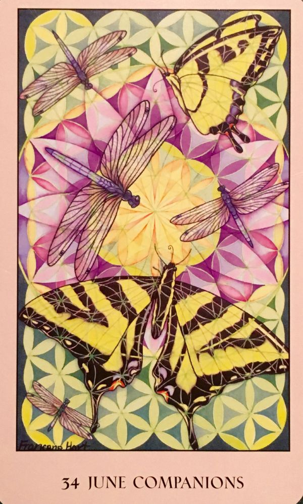 """Daily Angel Oracle Card: June Companions, from the Sacred Geometry Oracle Card deck, by Francene Hart June Companions: """"Transformation"""" """"Dragonflies and swallowtail butterflies ad…"""