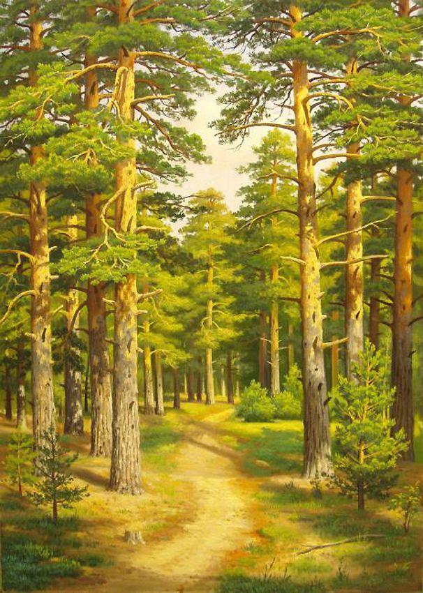 Картинки детские хвойные леса