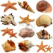 Resultado de imagen para caracoles marinos