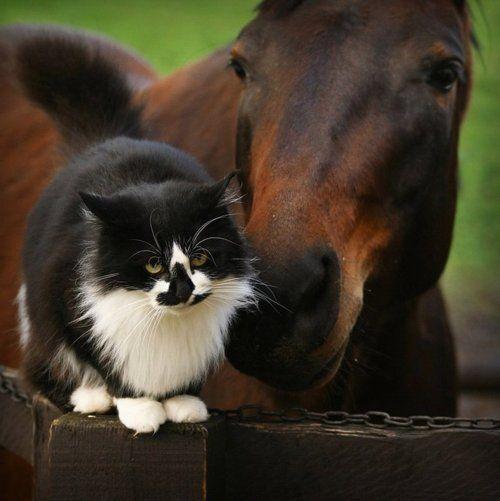 Horse & Cat: