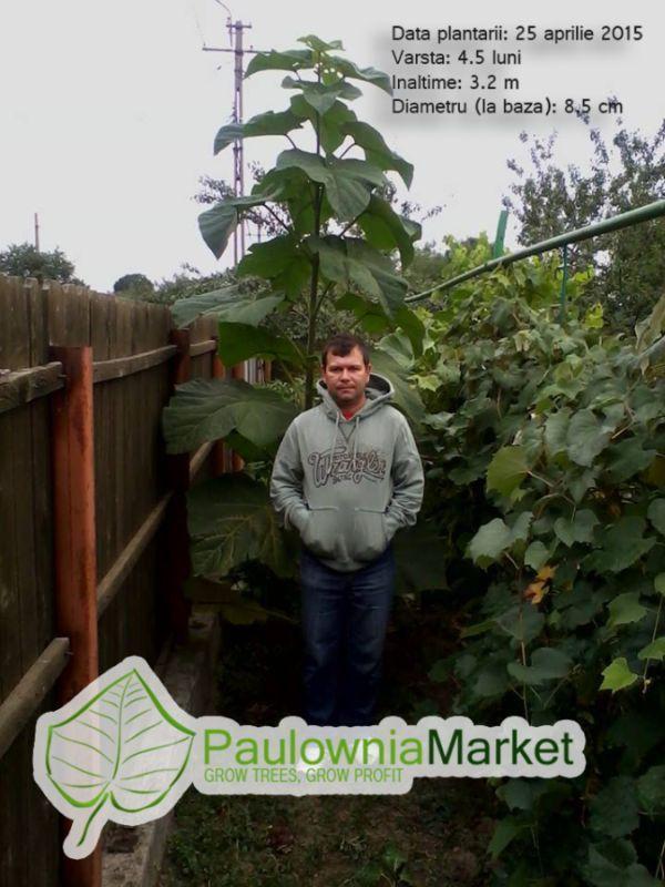 PaulowniaMarket | GROW TREES, GROW PROFIT