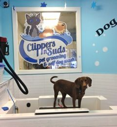 Pet grooming and self service dog wash Clippers n' Suds  Welcome to Clippers n' Suds pet grooming and self serve dog wash. We offer great prices and services with a new name and new management. #40 1935 37 St SW - Calgary Alberta Call - 403.246.7072 http://clippersnsuds.com/