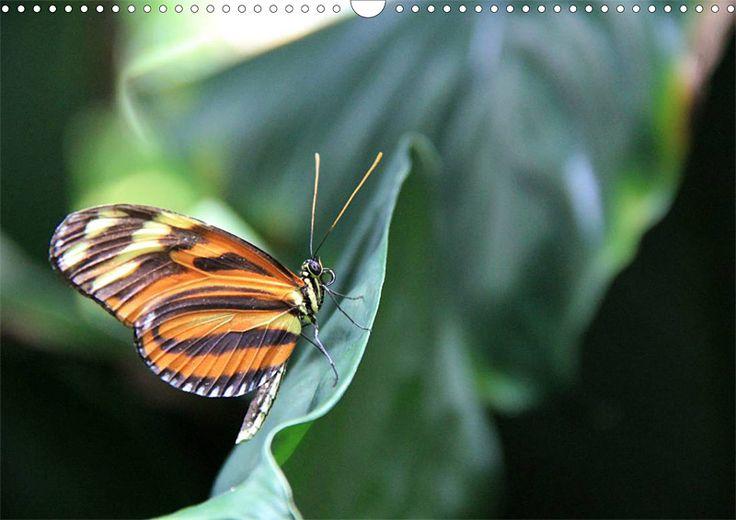 """Tier-Posterbuch """"Schmetterlinge der Tropen"""", Seite 8"""