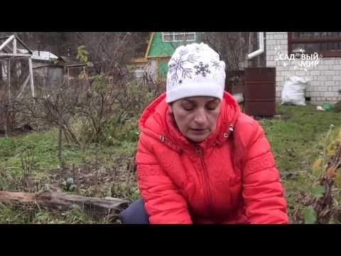"""Как сеять астры под зиму. . Сайт """"Садовый мир"""" - YouTube"""