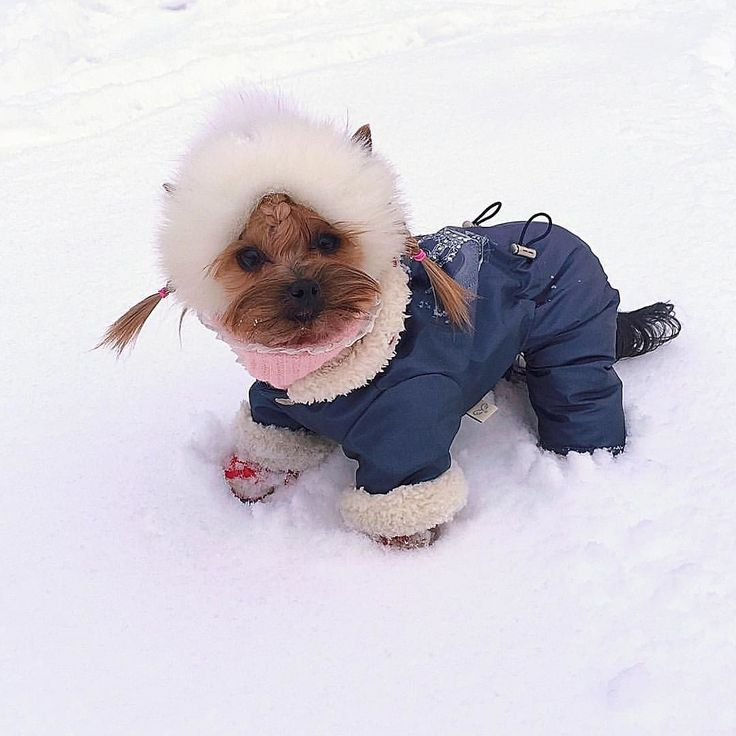 I'm ready! Let's play in the snow!