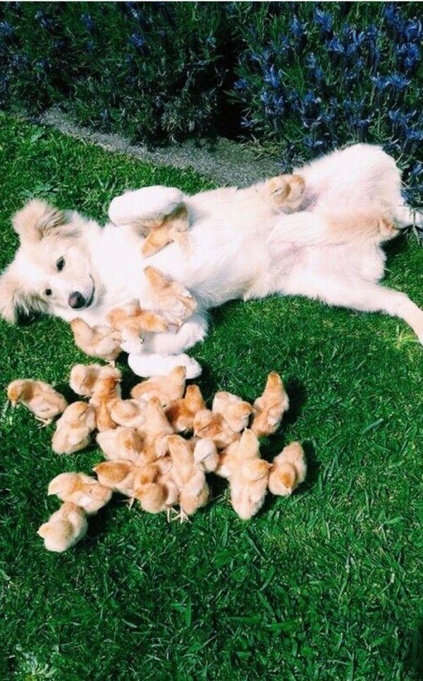 Babies Susse Tiere Tiere Haustiere