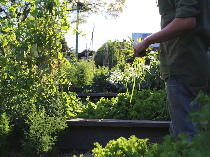 The Slowpoke: INTERVIEW: HARVEST CAFE // #newrybar #kitchengarden #byronbay Photo: Emma Bowen