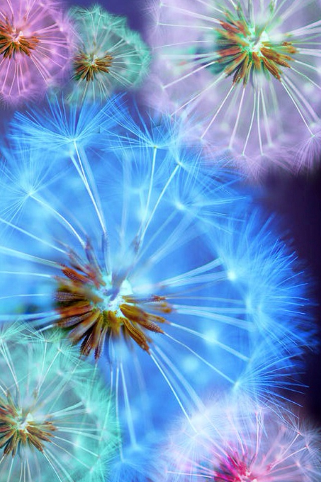 Blow on these dandelion seeds while making a wish...