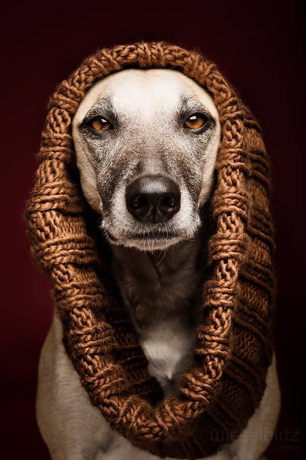 Doggies! The Funniest and Most Expressive Dog Portraits made by Elke Vogelsang - Explore like a Gipsy, Study like a Ninja