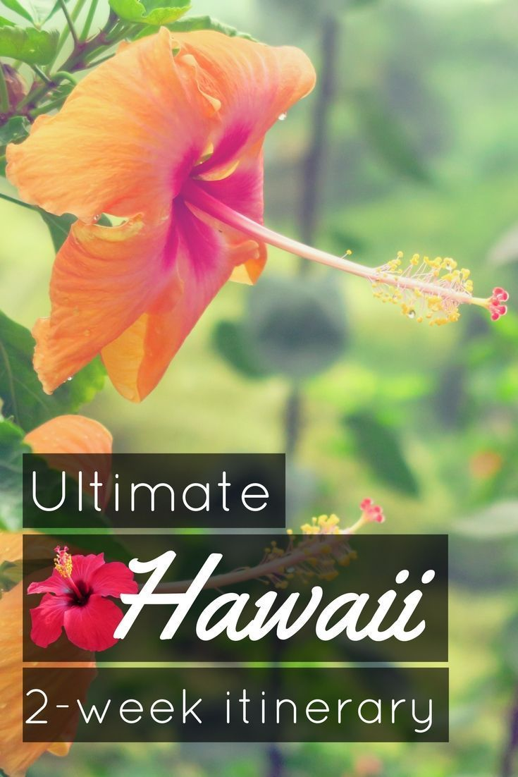 2 weeks in Hawaii: my ultimate travel itinerary in Hawaii for scuba divers including Maui and big Island: where to go, where to scuba dive, what to do and what to see, where to stay, how to travel around the hawaiin islands, when to go to hawaii and the best diving in Hawaii! The ultimate Hawaii travel guide and 2-week itinerary for Hawaii. What are you waiting for to go discover Hawaii? - World Adventure Divers. #travel #hawaii #pacific #scubadiving #scubadive #diving #maui #bigisland