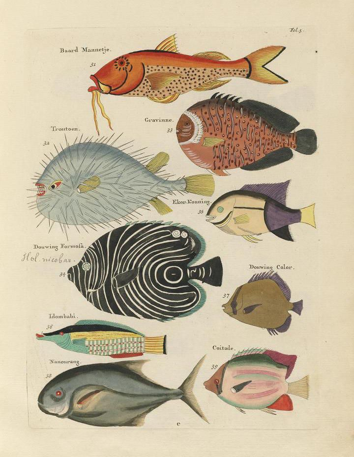 Images from the first colour publication on fish 1754 for 94 1 the fish