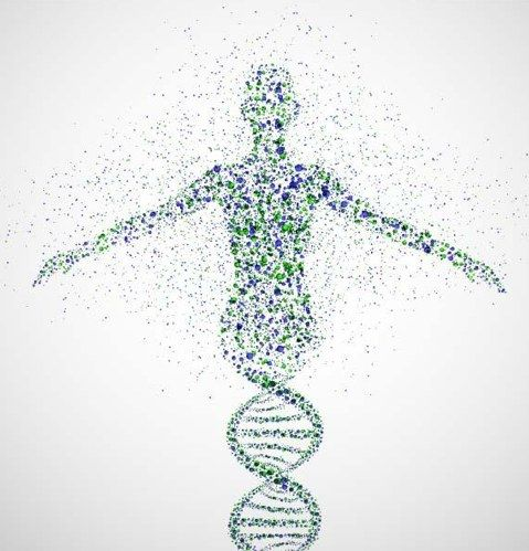 CAN WE RESET THE AGE-CLOCK ON OUR DNA? SCIENTISTS SAY YES! Now, the researchers say that unravelling the mechanisms behind the clock will help them understand the ageing process in humans, and ultimately lead to some form of slowing things down.