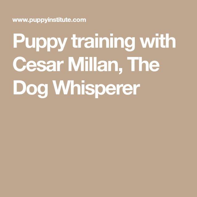 Puppy training with Cesar Millan, The Dog Whisperer #cesarmillan