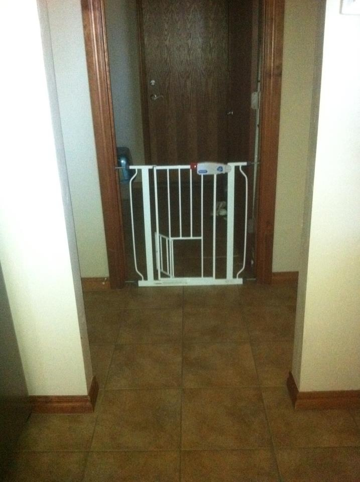 Perfect If You Have An Indoor Cat Plus Dogs This Gate