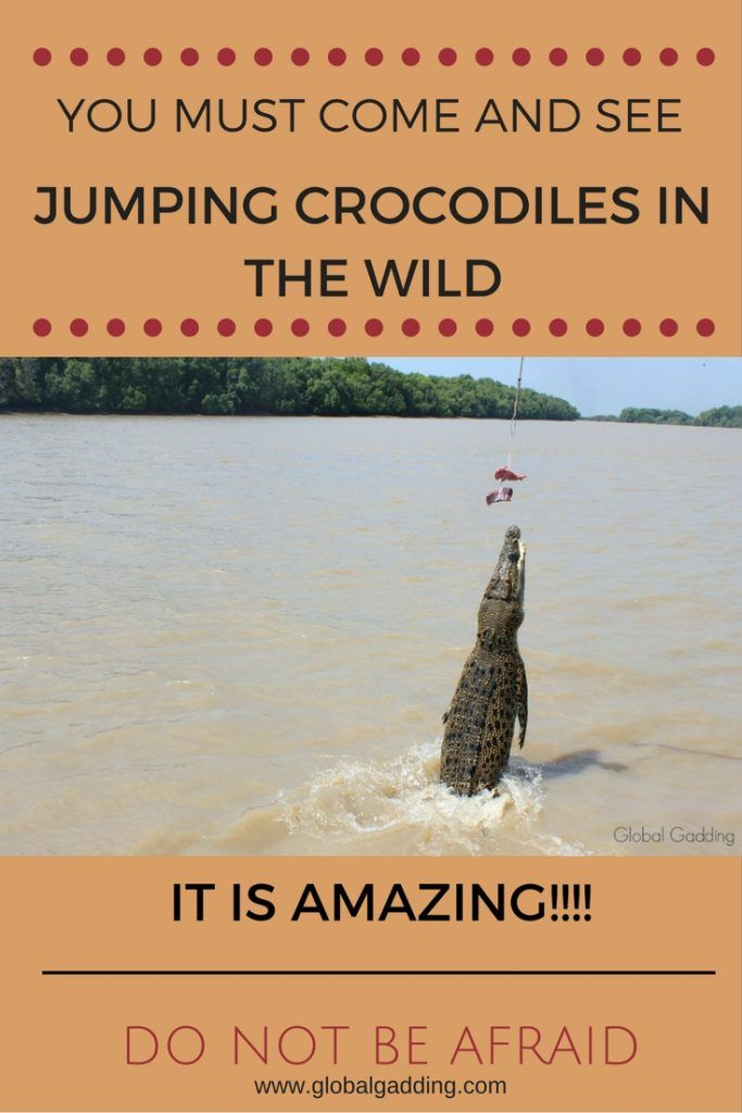 View crocodiles in the wild on a safe Jumping Crocodile Cruise along the Adelaide River. It is a fun packed experience! Don't believe me, read about it here at http://www.globalgadding.com
