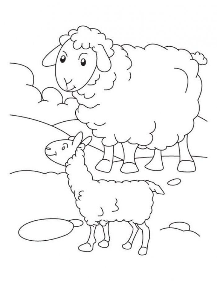 Coloring Pages Of A Sheep From Funny Sheep Coloring Pages For Kids