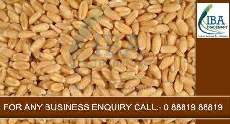Govt. Has Increased Import Duty on Wheat Government has raised import duty on wheat to 25% till March next year to restrict overseas purchases in the wake of falling global prices.Continue.....For more information visit:-http://goo.gl/04XwHu