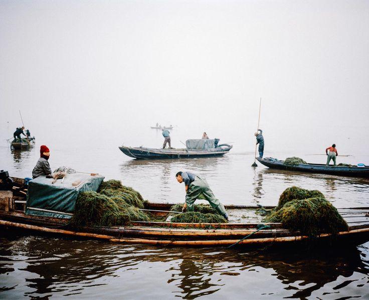 Hínár és rákhalász csónakok, Honghu, China, 2015.