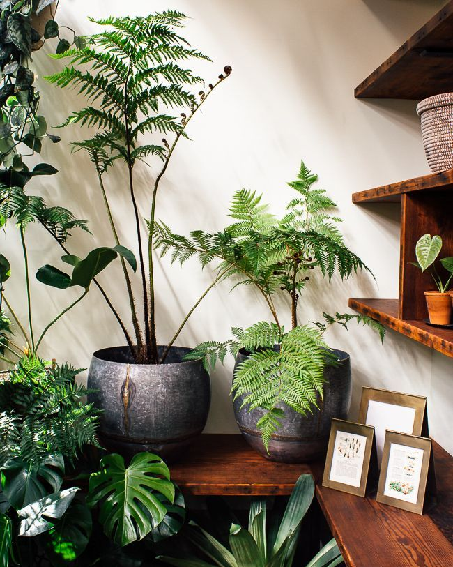 Greenery Houseplants: 10 Favorite Plants that Perfectly Match Pantone's Color of the Year