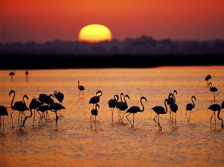 Doñana National Park, marshes, Huelva // Coto de Doñana, marismas