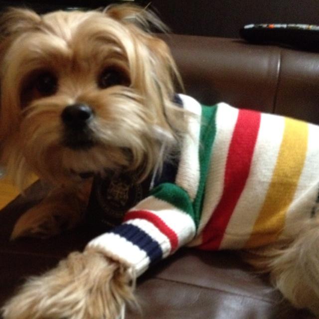 Hudson Bay Company Dog Sweater
