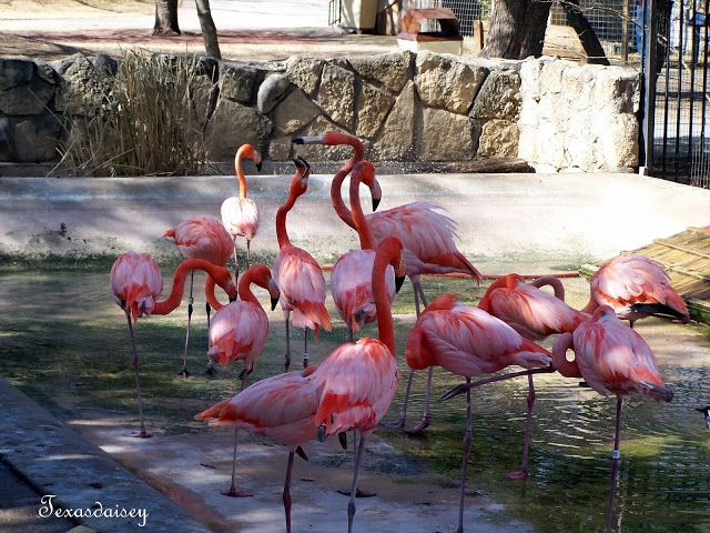 plastic pink flamingos essay