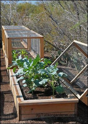 Covered raised beds. You could even use thick, clear plastic for the winter months for a cold frame.