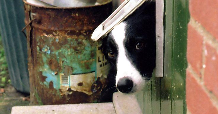 Cómo construir una puerta para perros. Construir completamente y por tu cuenta una puerta para perros puede ahorrarte mucho dinero, ya que comprarla en una ferretería o en una tienda de mascotas te costará muy caro. Hacerla tú mismo será muy divertido y gastarás muy poco dinero. Sigue estos pasos para saber cómo llevarla a cabo.