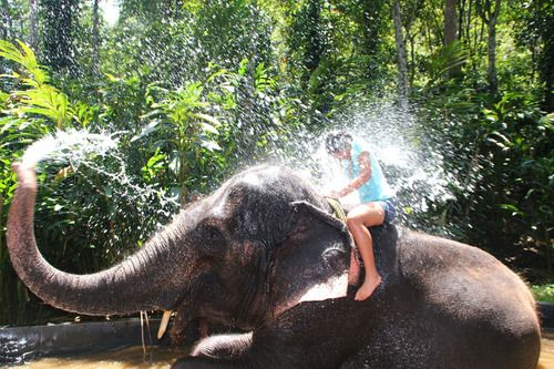 -asia-elephant
