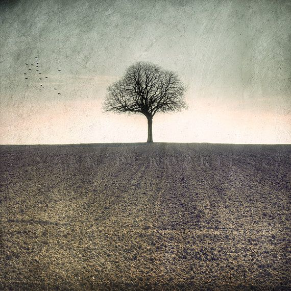 Winter number 1 - Tree photography - Autumn Photography - Sepia Brown Spooky trees - Naked Nature - Fine Art Photography Print 6x6 (15x15cm)