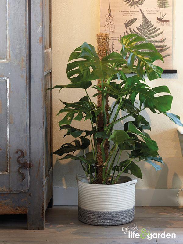 Wit/grijze stoffen mand met grote gatenplant.
