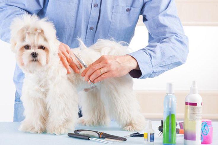 Dog grooming Dog grooming, Dogs, Dog behavior