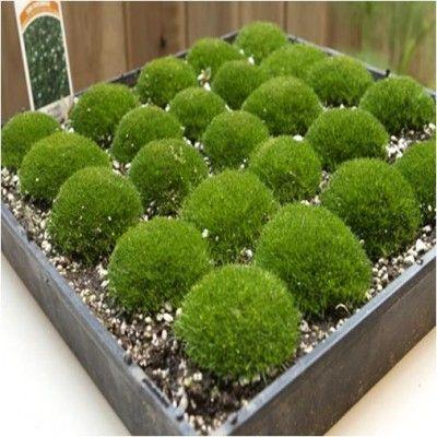 Growing a Moss Garden