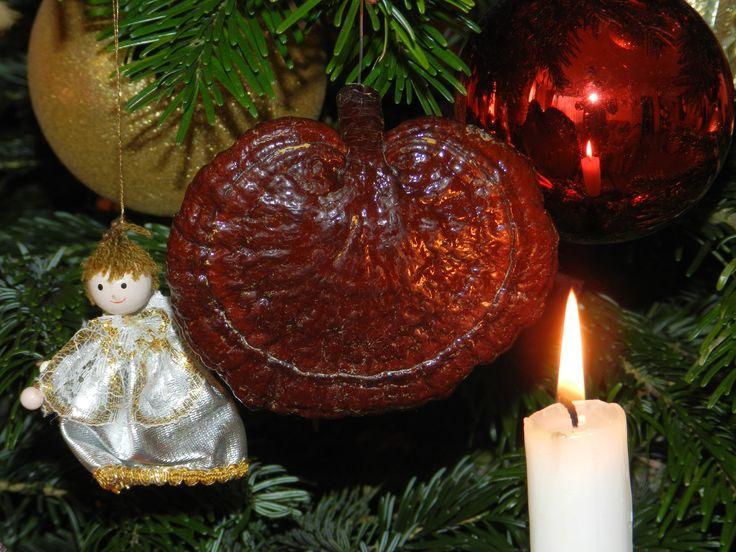 Boldog Karácsonyt minden kedves gyógygomba rajongónak!