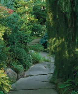 Conifers for Shade  Yes, you can grow evergreen trees and shrubs in shade. Who knew?