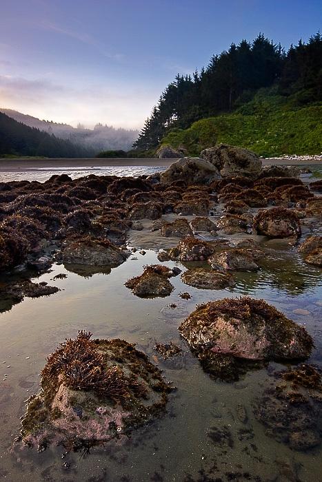 Tide Pool, Cannon Beach, Oregon | Oregon coast, Beautiful ...  |Pacific Northwest Tide Pool