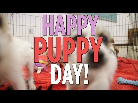 Watch These Adorable Puppies Playing to Celebrate National Puppy Day | TIME