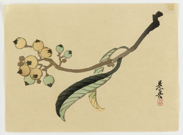 Lichee leaves and fruit by Shibata Zeshin, 1868-91. Woodblock print; ink and color on paper, 18,2 x 24,8 cm. Meiji era.