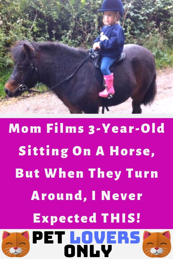 horse horses cute love animal animals pet pets