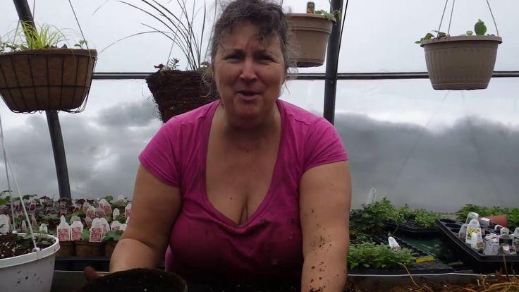 Capsule hebdomadaire 1 des Serres Li-Ma : Comment planter vos bulbes et ...