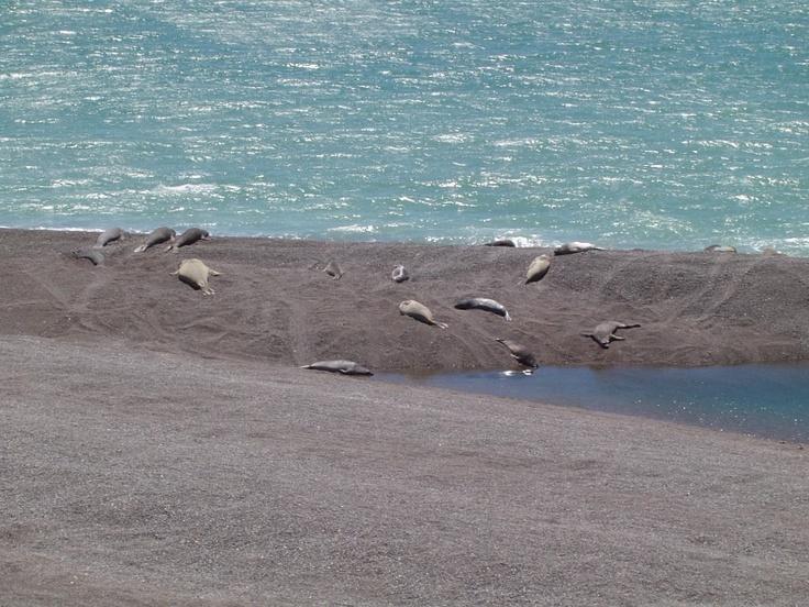Lobos marinos en Península Valdez