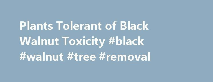 Plants Tolerant of Black Walnut Toxicity #black #walnut #tree #removal http://denver.remmont.com/plants-tolerant-of-black-walnut-toxicity-black-walnut-tree-removal/ # Plants Tolerant of Black Walnut Toxicity Black walnut (Juglans nigra ) is considered one of our most valuable native hardwood lumber trees and is often used in large scale landscapes. However, in the smaller-scale home landscape, the leaves and fruits are considered by some to be a messy nuisance. Furthermore, while many plants…